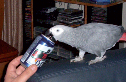 Does your parrot have everything it needs? Part II