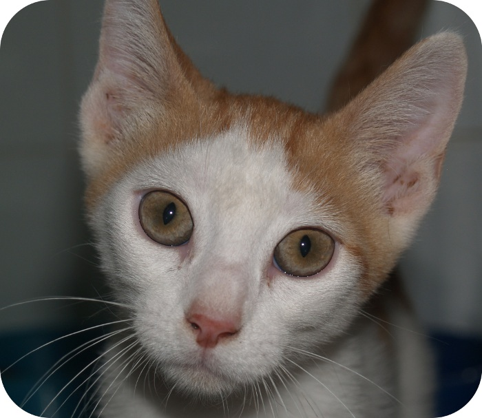 ¿estás buscando una mascota? ¿conoces alguna mascota que necesite un hogar?