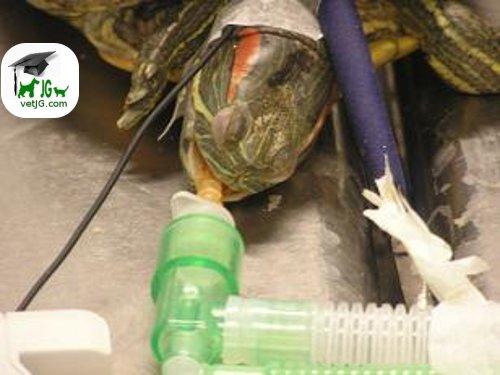 Los reptiles y el quirófano