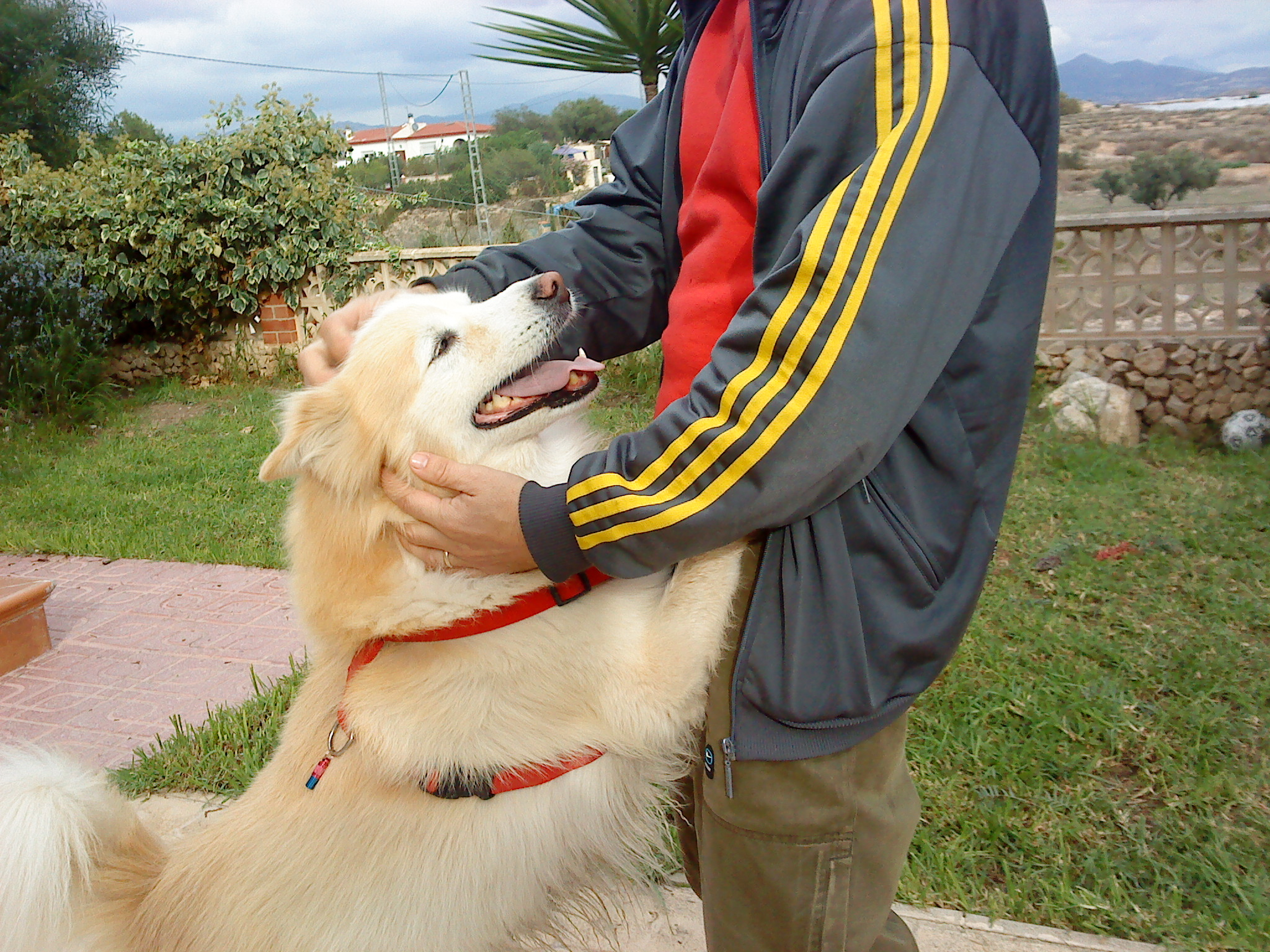 Conductas «raras» en nuestros perros.