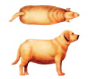 ¿está mi perro muy gordo? ¿cúanto peso le sobra?