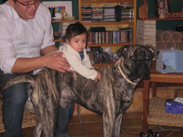 El cariño incondicional de nuestro perro.