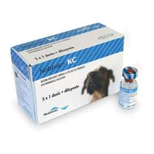 ¿Que es la traqueobronquitis infecciosa canina o «tos de las perreras»?