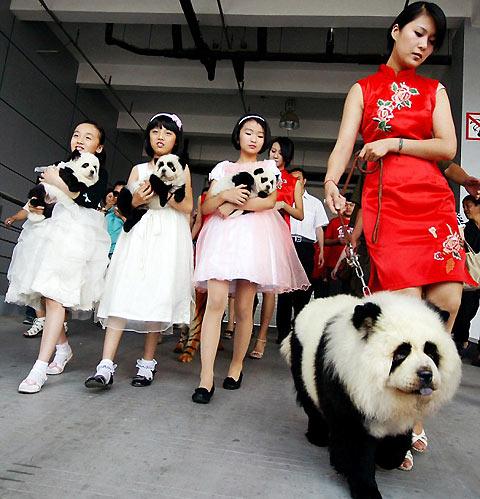 La nueva moda…nuevas razas de perro ? | El blog de los clientes JG