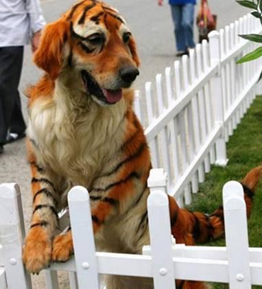 La nueva moda…nuevas razas de perro ?