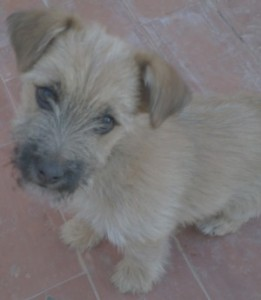 ¿Que es la Dirofilariosis canina?