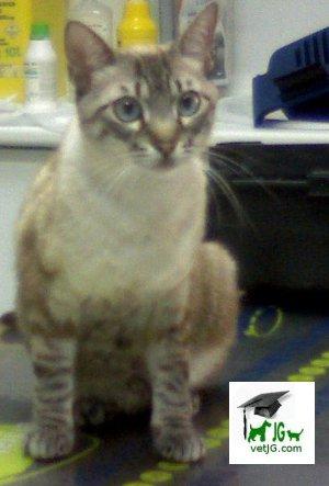 Los gatos que parecen linces: la capa LYNX.