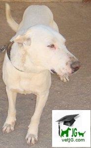28 de Mayo, a partir de hoy el día del perro sin raza.