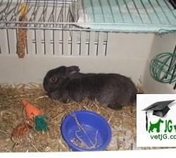 conejo abadia tres bis