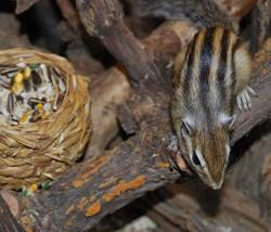 ardillita con nido