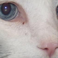 Trucos para saber si nuestro gato está enfermo. Parte I