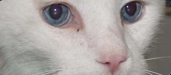 Trucos para saber si nuestro gato está enfermo. Parte I | El blog de ...