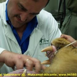 Medicina de felinos: cuando es un gato un poco grande.