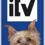Los sábados, ITV gratis para tu mascota