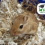 La importancia de la desparasitación en pequeños mamíferos.