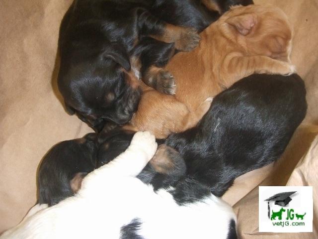 Cuidados básicos: el cachorro huérfano