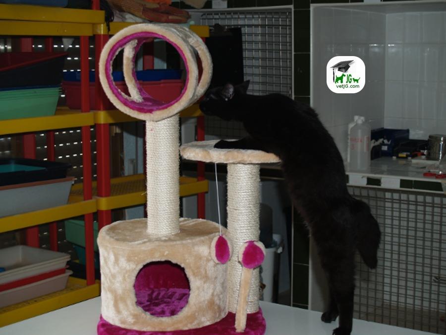¿Tiene su gato todo lo que necesita ?