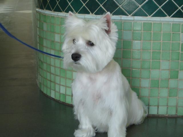 ¿ qué puedo hacer para prevenir la leishmaniosis canina ?