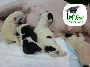 Los primeros días de nuestros nuevos cachorros.