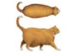 ¿está mi gato muy gordo? ¿cuántos kilos le sobran?