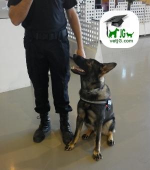 Los perros policía