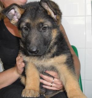 Os presentamos a Ikram, un nuevo miembro de la familia JG!