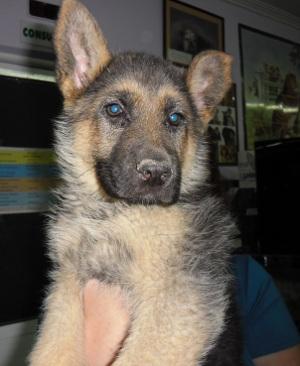 Os presento a otra cachorrita preciosa…se llama Keyla.