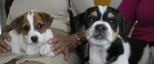 Chuky y Coco, dos nuevos miembros de la familia JG…con mucha ternura.