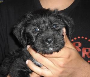 La pequeña Nala, una cachorrita muy alegre.