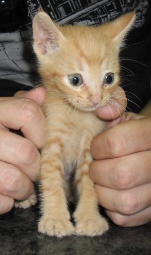 Chama Ramone…un gatito con mucho encanto.