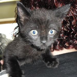 Chuko Ramone, el gatito que estaba esperando Chama…