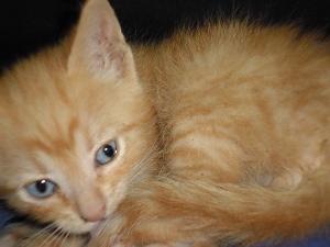 Gatito, el pequeño nuevo paciente de JG.