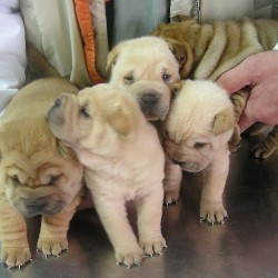 Ya no es una buena noticia: no se prohibirá la venta de perros y gatos en tiendas de mascotas.